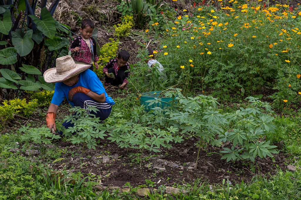 Gardening in Doi Pui Village