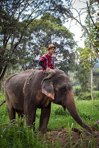 The Mahout - Thailand
