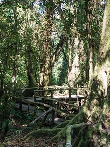 Forest Walkway