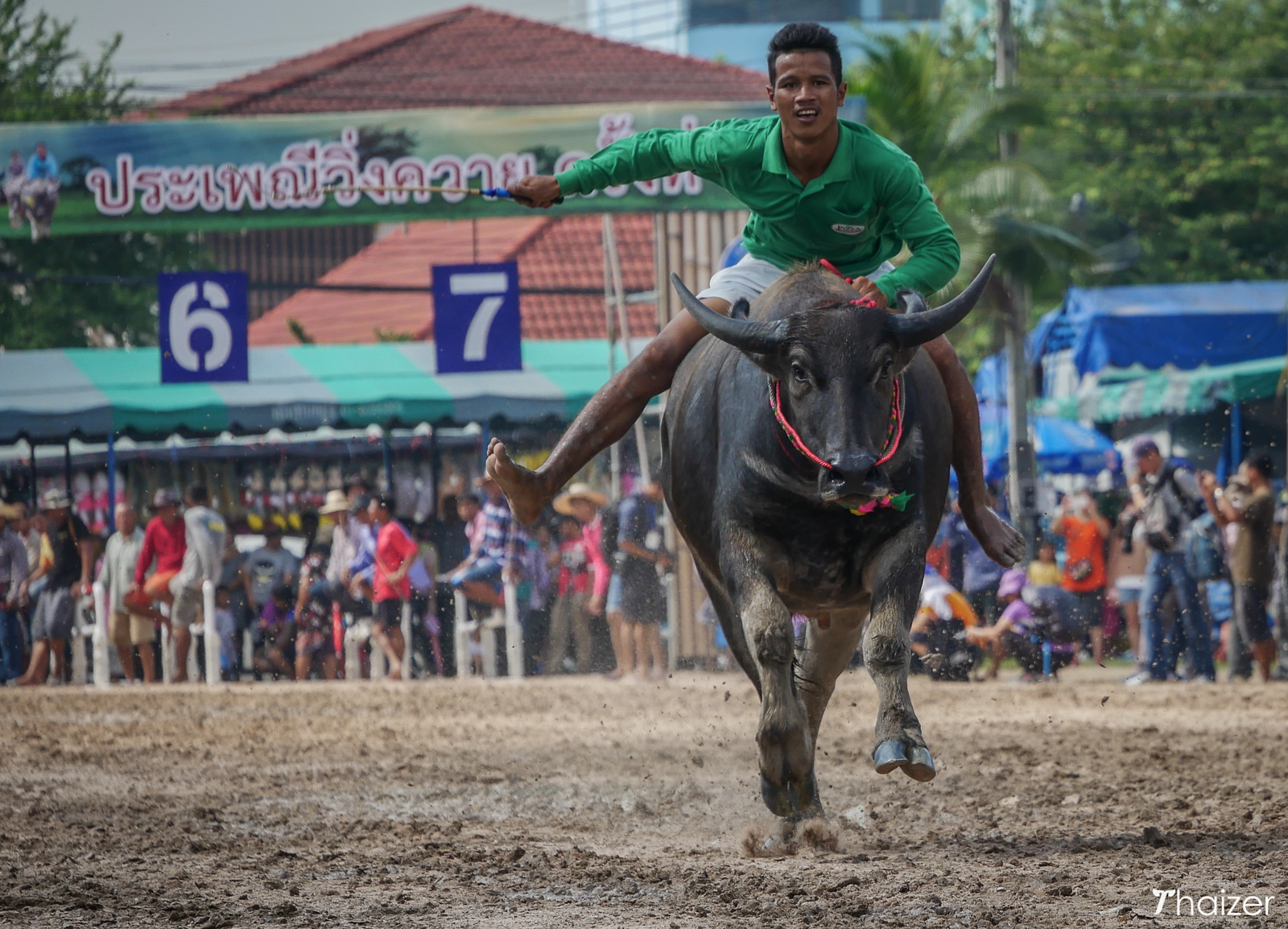 Chonburi Buffalo Racing Festival