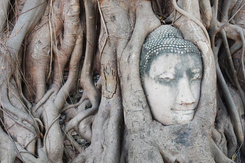 The famous Buddha head of Wat Mahathat, Ayutthaya