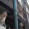 Central Lopburi is crawling with monkeys