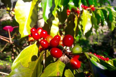 Coffee Beans by Poj Hankiti