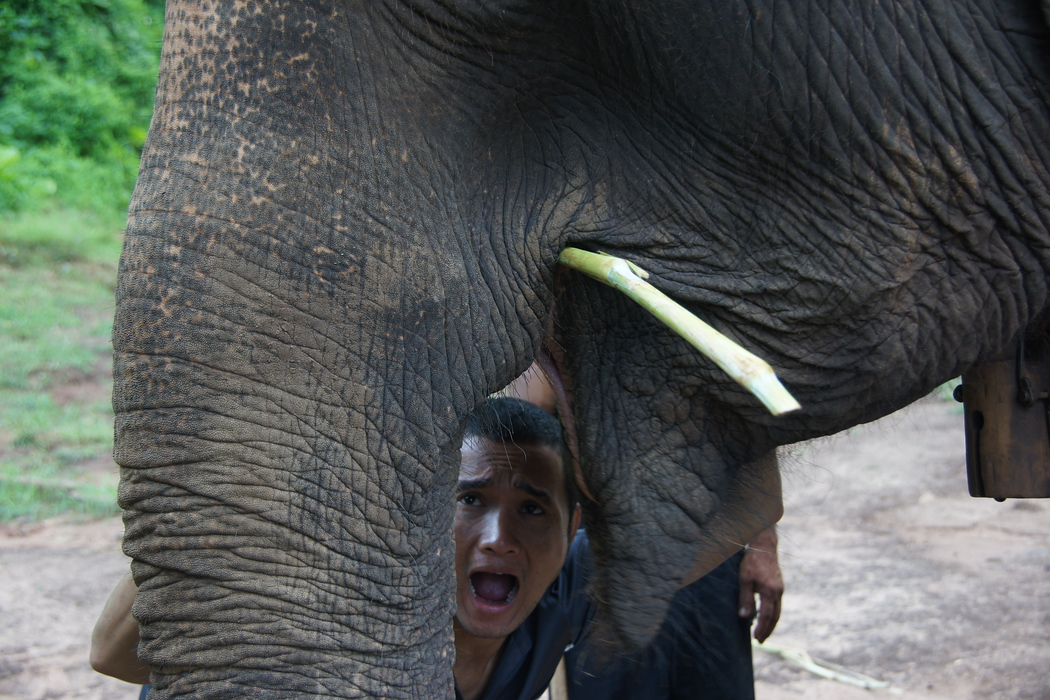 Elephant Humour in Chiang Mai, Thailand