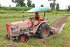 Plowing A Paddy To Prepare It For Planting