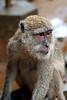 Monkey in the Buddha Cave (Wat Suwannakuha)