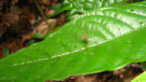 """Floating spider"" Khao Sok National Park, Thailand"