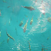 Some of the fishes you seen while snorkeling