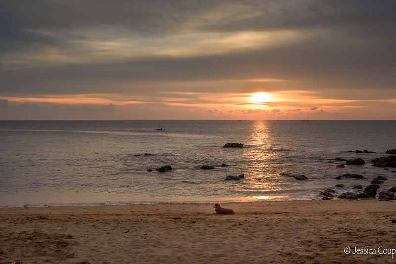 Dog Appreciating Sunset