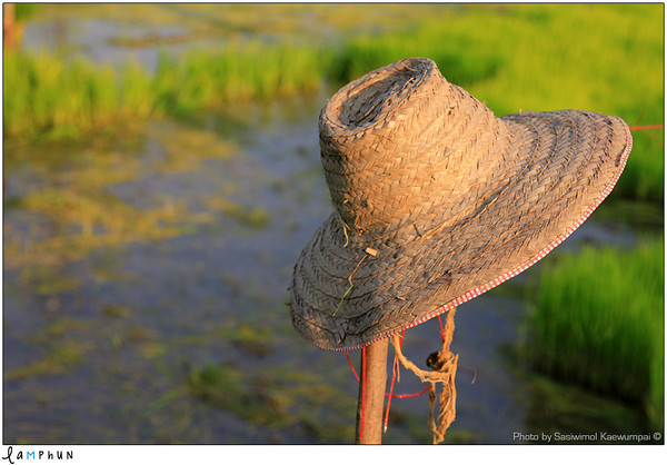 Lamphun Province, Thailand A farmer's hat… after work