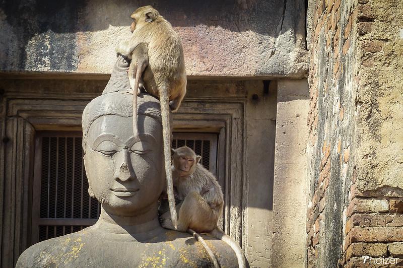 Lopburi monkey banquet festival
