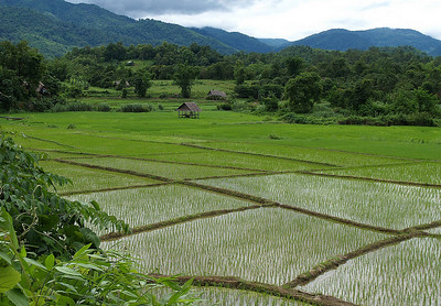 Rice field, Mae Hong Son, Thailand