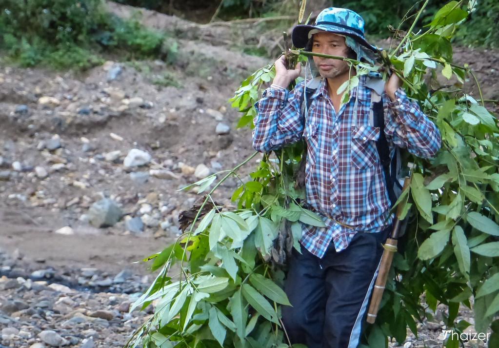 Khun Rangsri foraging in Mae Hong Son