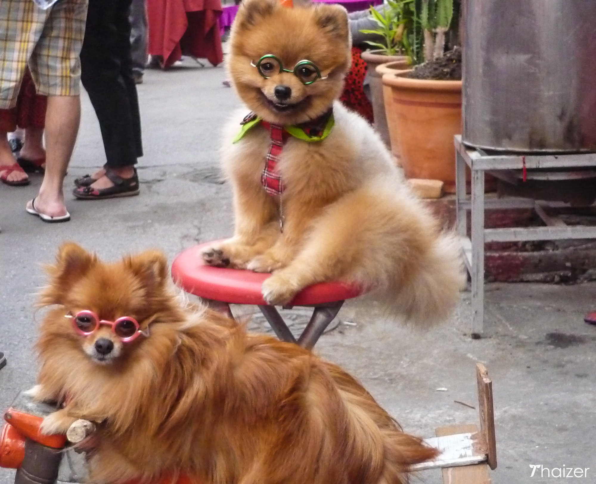 dogs in glasses