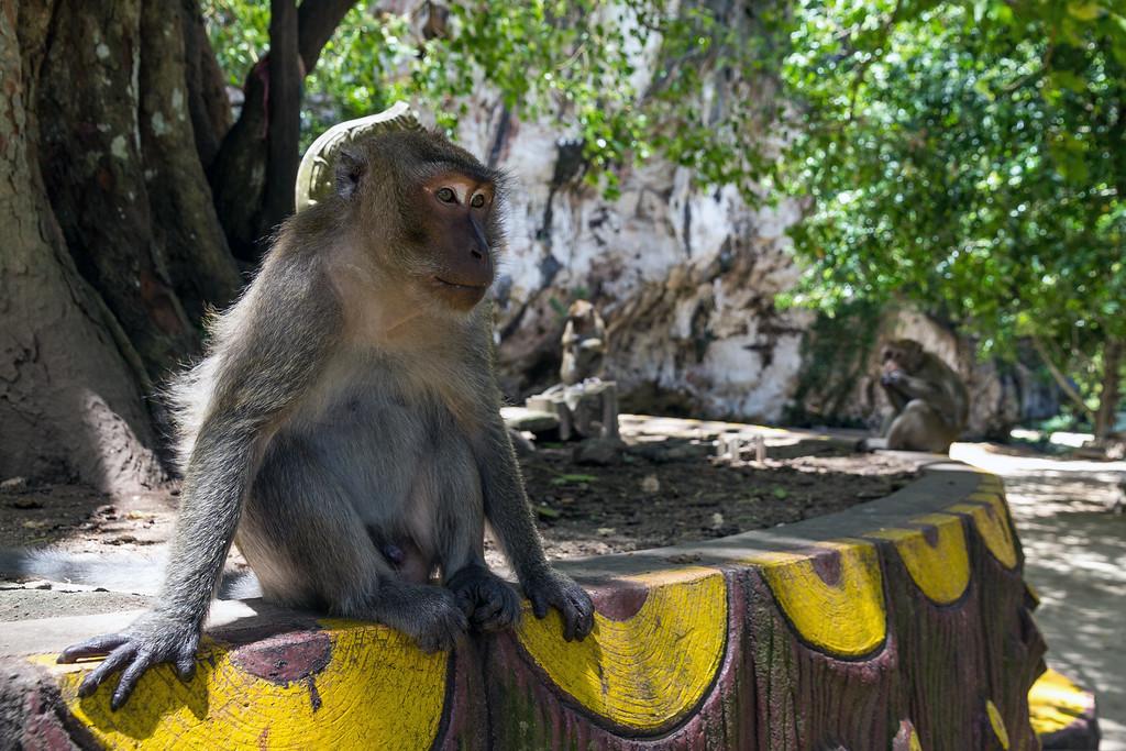 Long-Tailed Macaque at the Wat Suwannakuha Temple Cave entrance, Phang Nga