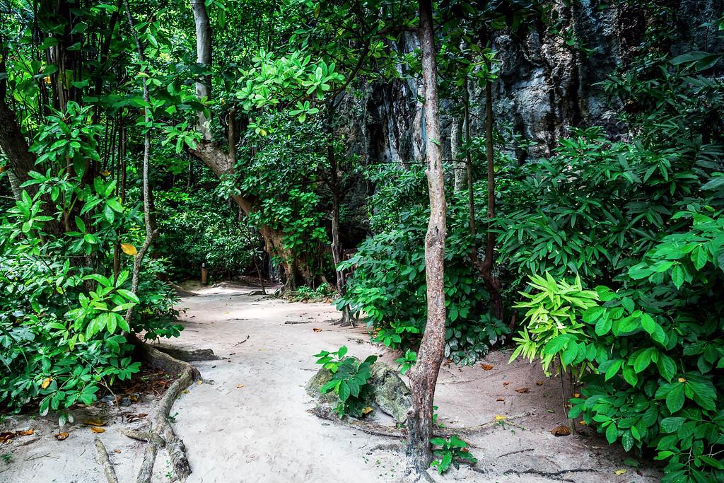 Walking Track on Ko Phi Phi Leh