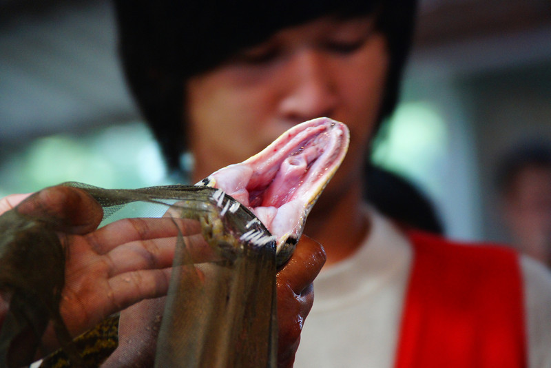 """These Thai performers forcibly open this snakes mouth wide open during a Thai snake show.  A travel photo from a Thai snake show. <a href=""""http://nomadicsamuel.com"""">http://nomadicsamuel.com</a>"""
