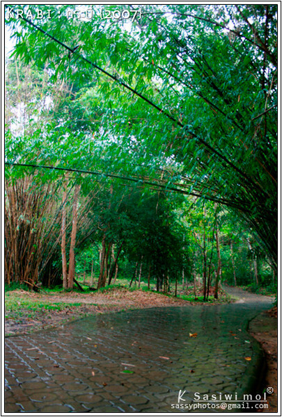 "A nice pathway at ""Namtok Ron"""