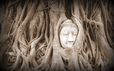 Ayutthaya, Thailand.  This statue head was placed near the tree in the 1950s.  Soon the tree claimed it for its own.