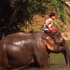 Mahout rides elephant in river after bathing,  Pai area, Thailand