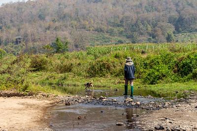 Thai man walking dog through shallow river bed in Thailand