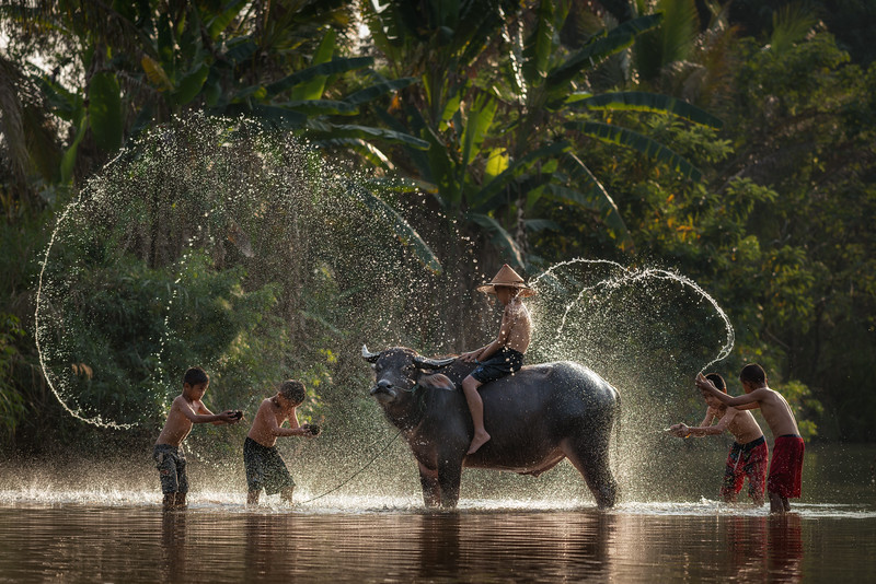 Boys in River with Water Buffalo