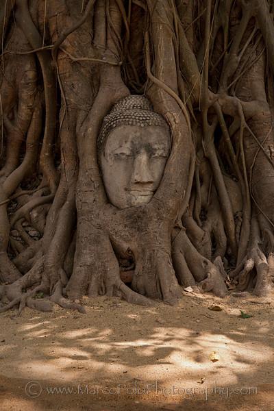 """Ayutthaya. Wat Mahathat No2. 15"""" x 22"""""""