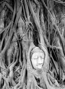 This Buddha statue head was placed near the tree in the 1940's.  It didn't take much time for the tree to claim it.  Ayutthaya, Thailand.