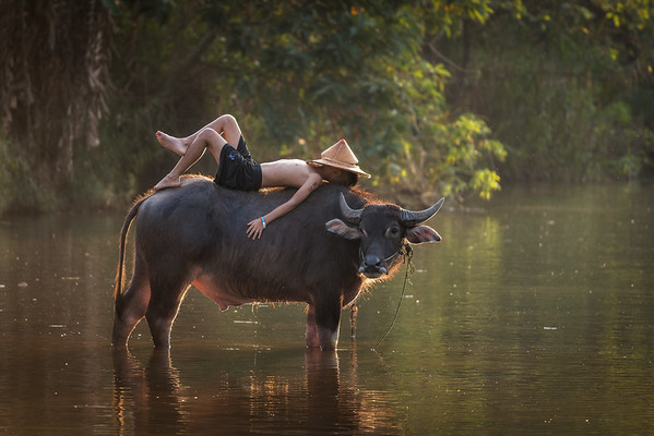 Boy and Water Buffalo