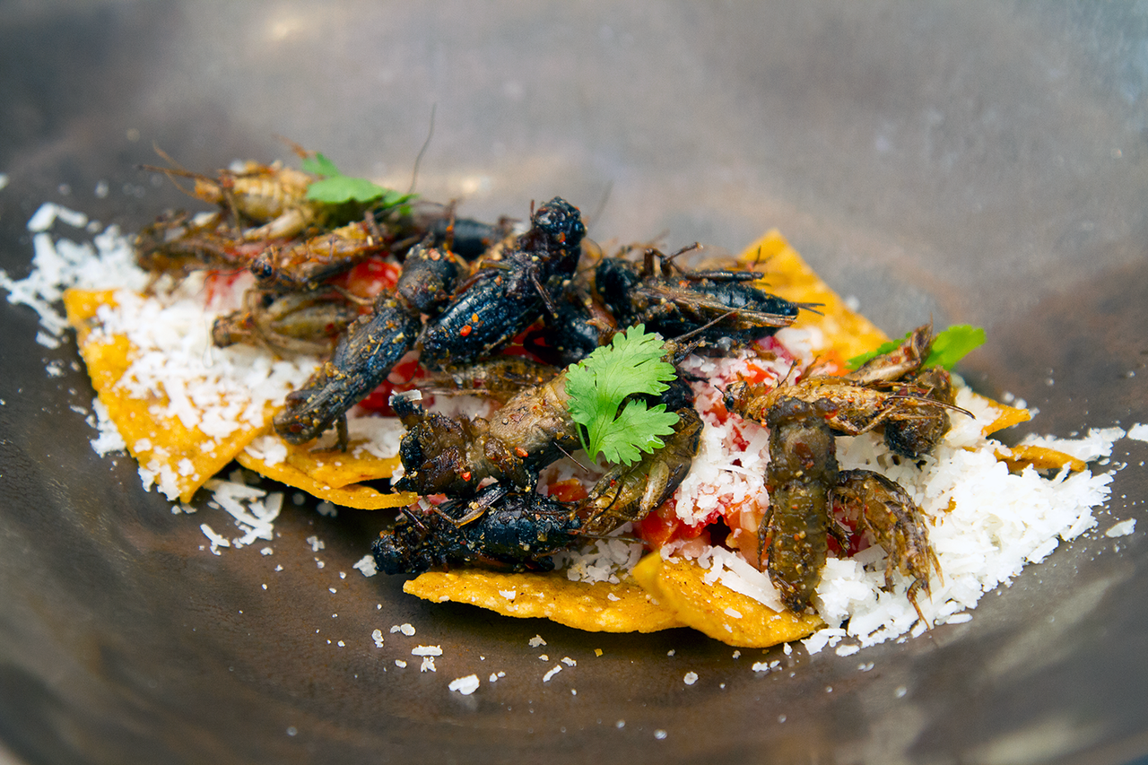 insects in the backyard dish cricket nachos