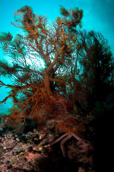 Corals at Koh Haa