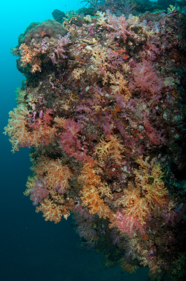 Soft corals at Koh Haa