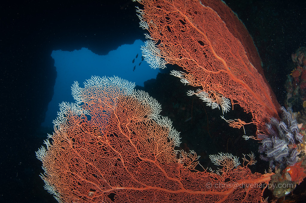 Swimthrough and fan corals, Myanmar