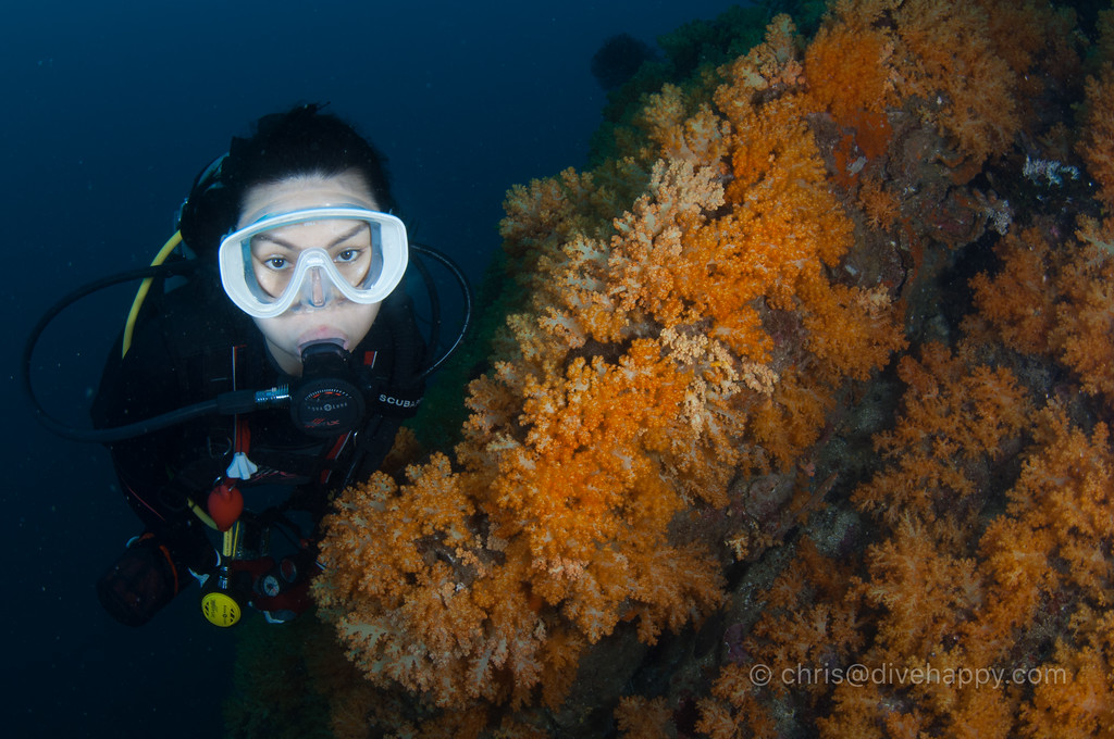 Diver with orange soft corals, Myanmar