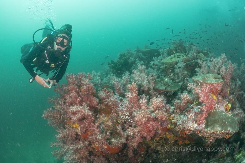 Dive buddy with soft corals, Richelieu Rock
