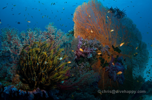 Similan Islands Reef