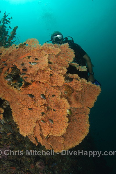 Fan Corals, Koh Bida Nok, Thailand