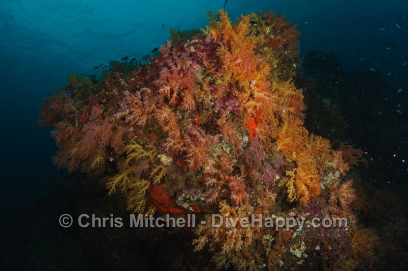 Soft corals covering one of Koh Haa's big rocks, Thailand