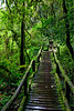 Walk In The Rain Forest