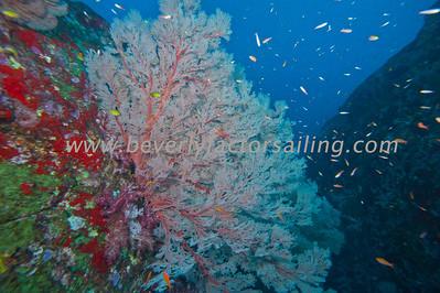 Thailand - Koh Tachai Pinnacle - Dive 12_0814
