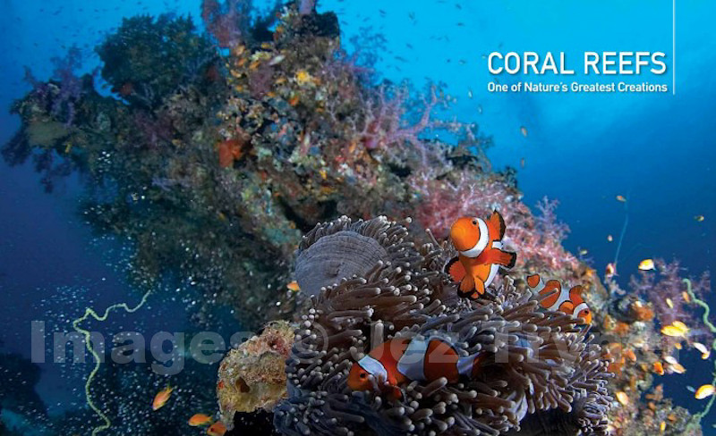 Coral Reefs chapter opening spread from the book Thailand's Underwater World