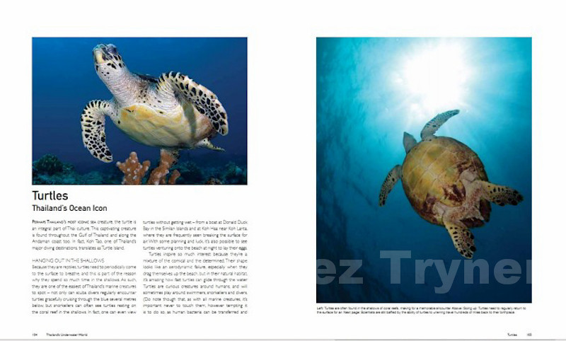 From the Turtles chapter of the book Thailand's Underwater World