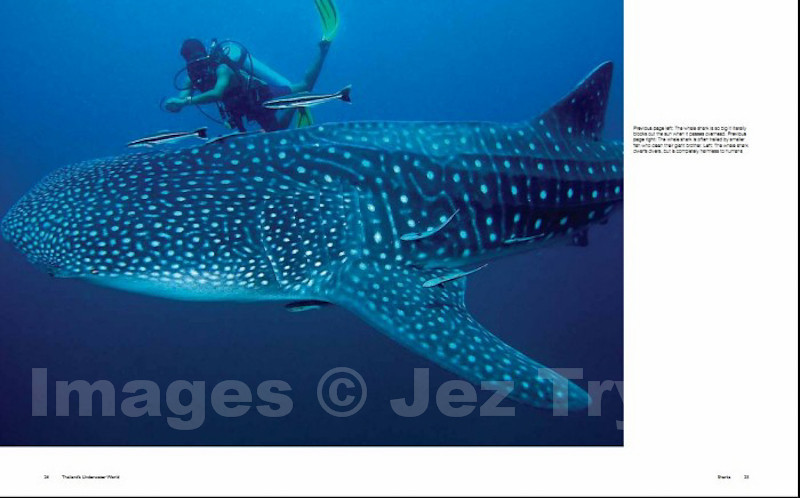 Whale shark and diver from the Sharks chapter of the book Thailand's Underwater World
