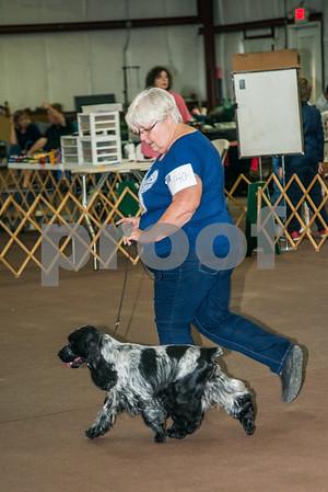 Thanksgiving 2017 Dog Show - RING PICS