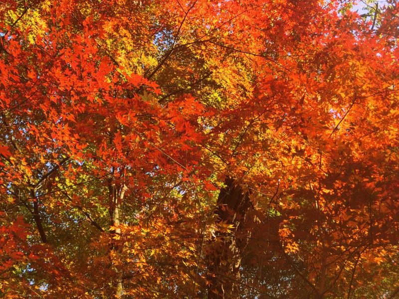Leaves in autumn, Seoul, Korea