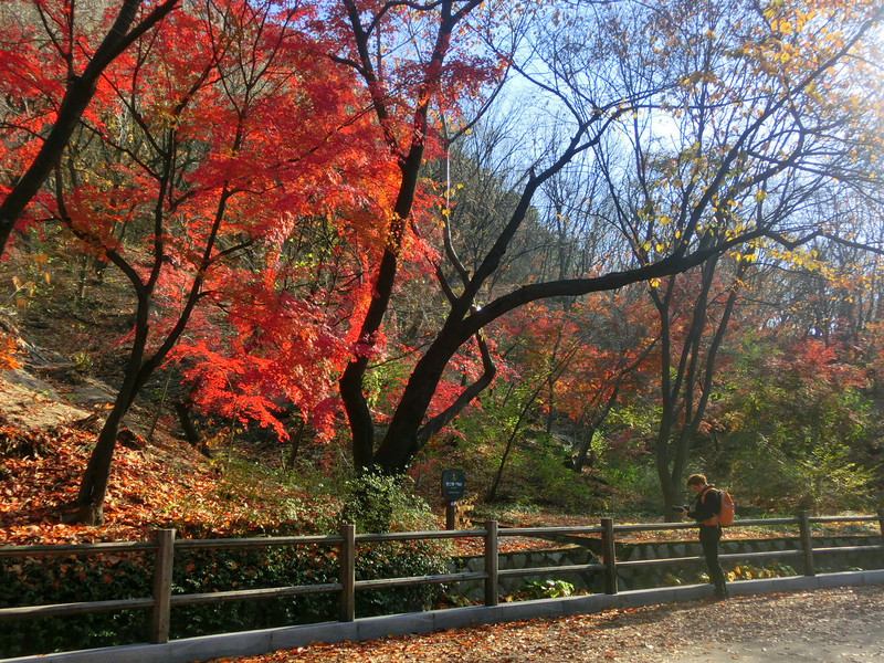 Namsan and its vibrant colours in the fall, Korea