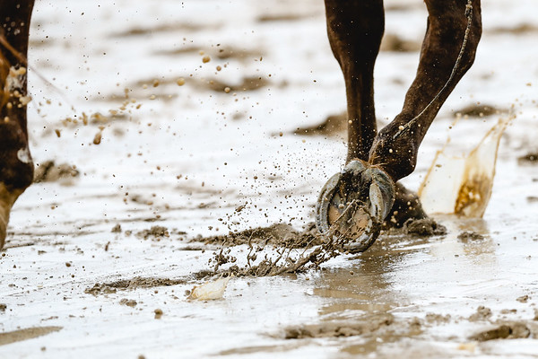 A horse trots through the mud on the track at Churchills Downs on Saturday. Staff Photo By Josh Hicks