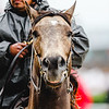 A horse smiles before a race during the 143rd Kentucky Derby at Churchill Downs on Saturday. Staff Photo By Josh Hicks