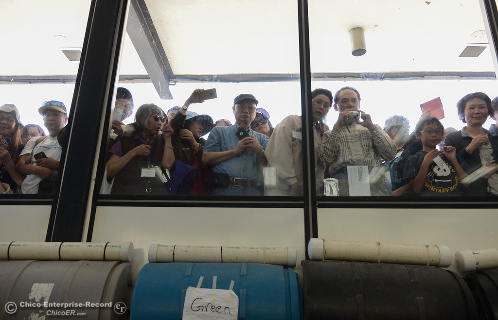 . Visitors watch as the eggs are harvested from the fall run salmon during the 23rd Annual Oroville Salmon Festival September 23, 2017 in Oroville, California. (Emily Bertolino -- Mercury Register)