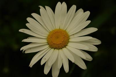 A Beautiful Flower